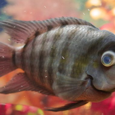 """I love how this fish """"looks"""" like he is smiling."""
