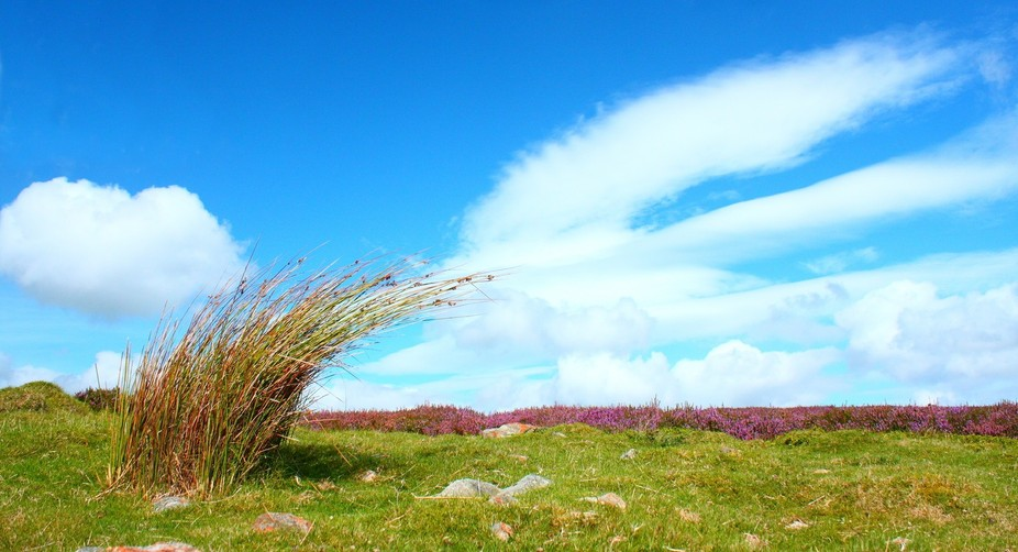 This picture is all about the symmetry of the grass and cloud (which is an elliptical cloud being...