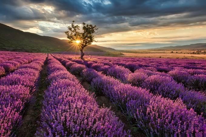 Lavender sunrise by evgeni_ivanov - The Colors Photo Contest