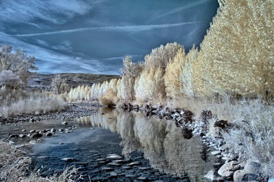 Truckee River Fall Color In Infrared.