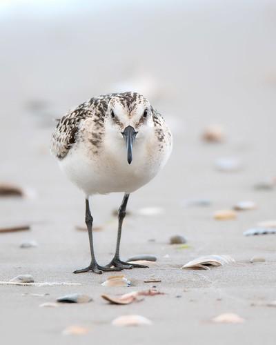 Close Encounter of the Bird Kind