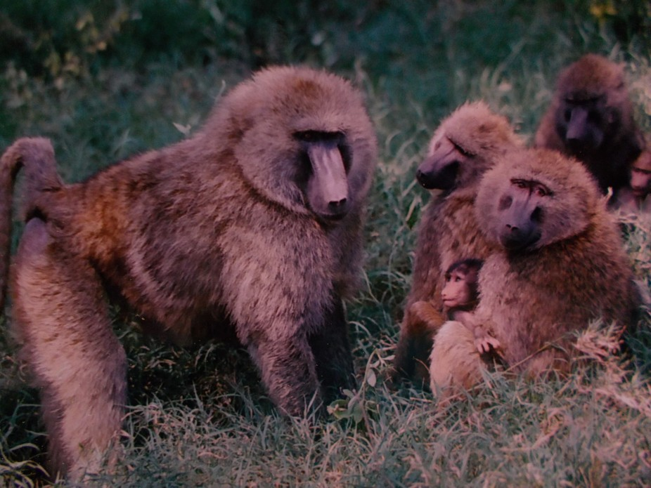 #Baboons #Together