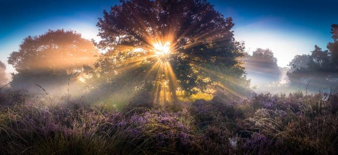 early sunrays by martijnvansteenbergen - Flares 101 Photo Contest