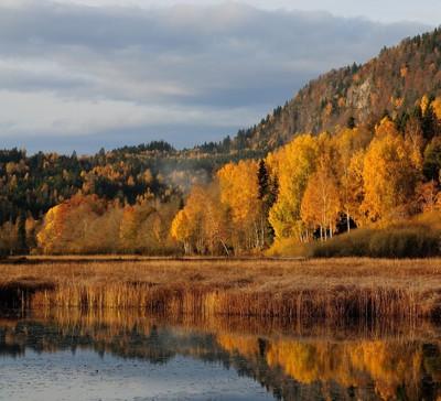 Magnificent Autumn