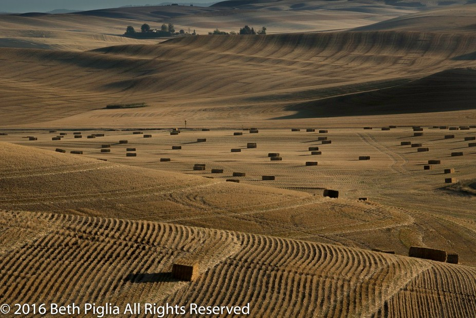 The Palouse is an amazing area of rolling hills and contour farming.  The combination makes for g...