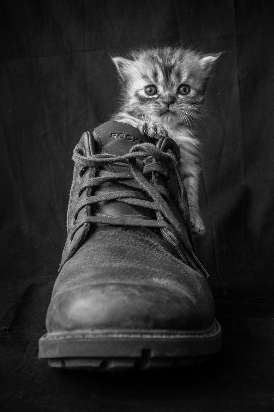 BIG FOOT by lessysebastian - Kittens vs Puppies Photo Contest