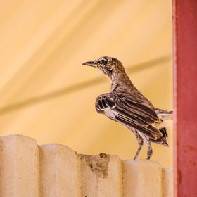 A Lost and exhausted bird standing all alone in the hot arid California deserts. We Encountered the Bird on our first ever trip to California ; i...