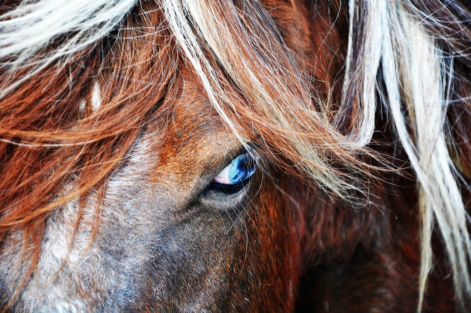sad pony,think the pony may be blind as one eye was blue and the other was grey.....very sad
