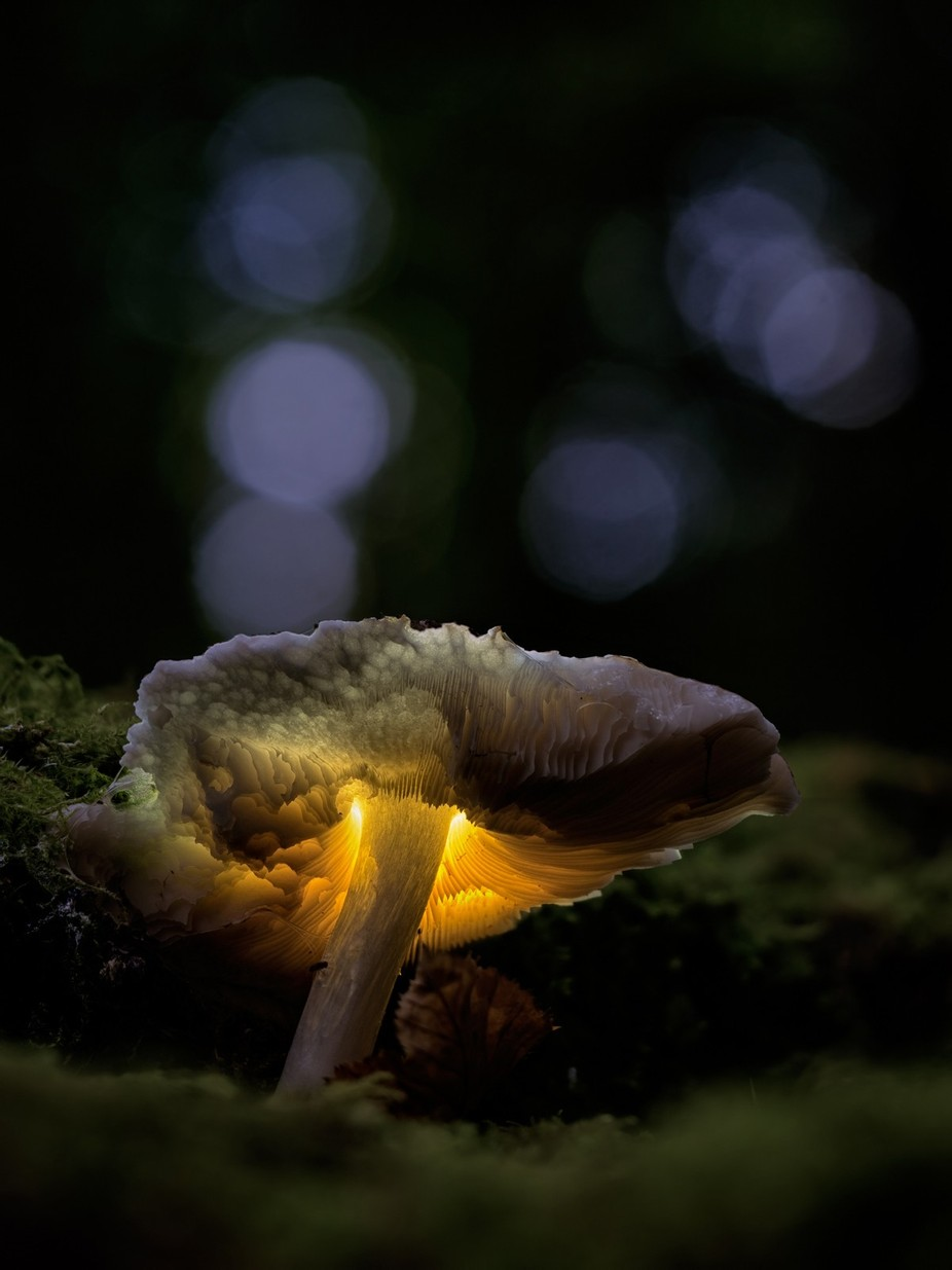 glowing mushroom by drbonn - Close Up Art Photo Contest