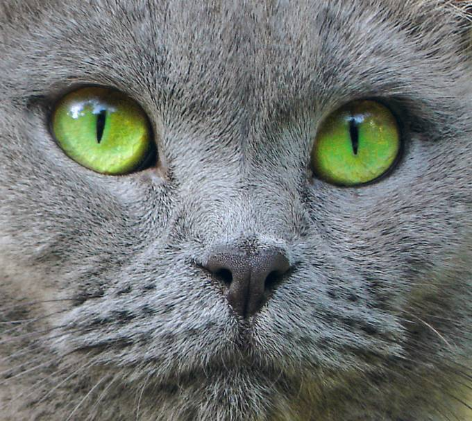 It's all about the eyes! by Annehm - Green Eyes Photo Contest