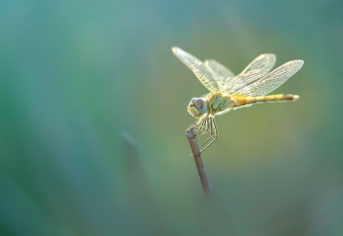 dragonfly by didierwthrich - My Best Shot Photo Contest Vol 2