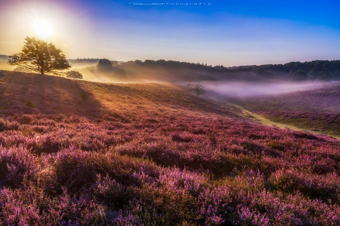 Foggy morning by DennisartPhotography - Mist And Drizzle Photo Contest