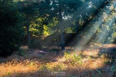 Nature Rays