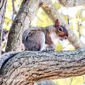 Picture of a squirrel chilling on a tree.
