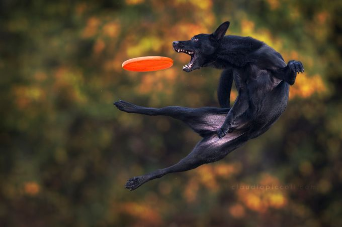 Black & ...colors :) by ClaudioPiccoli - Orange Tones Photo Contest