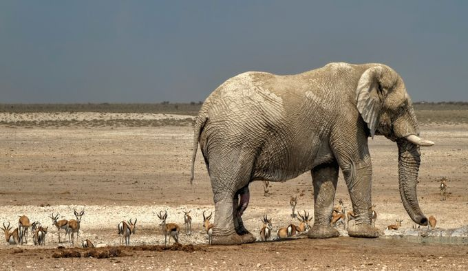Elephant in Etosha by MarianavdW - Explore Africa Photo Contest