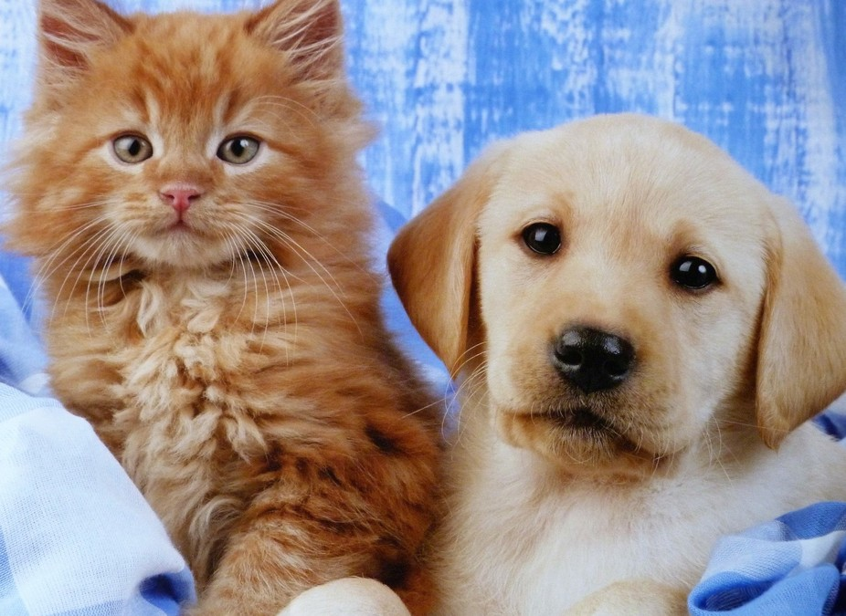 A Kitten and A Puppy Posing for the Camera