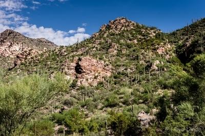 Mountains, rocks and desert plants
