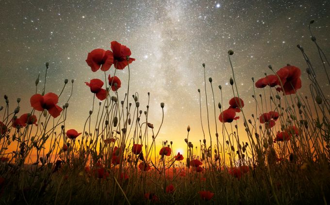A Midsummer's Night Dream by adrian-borda - Your Point Of View Photo Contest
