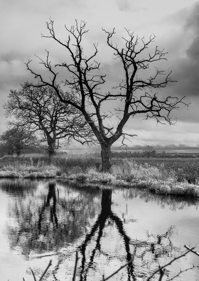 Stark Trees by Water