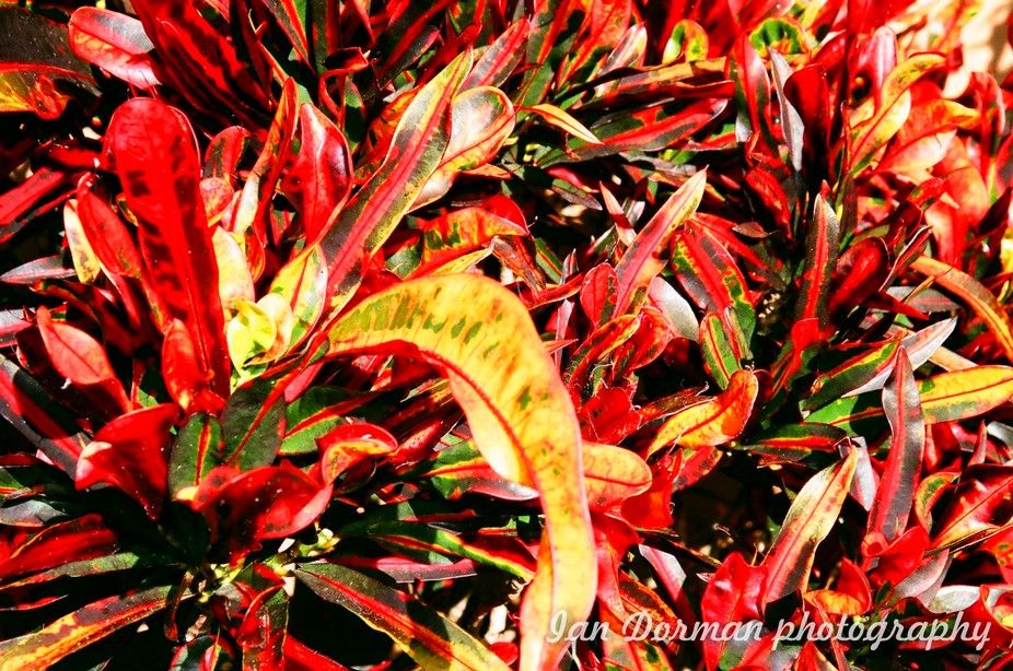 Just a shot of magnificent leaves mid summer in full colour