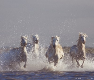 Angels of Camargue