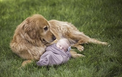 The Nanny Dog