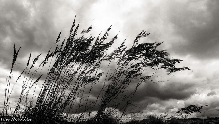 Sea Oats and Clouds