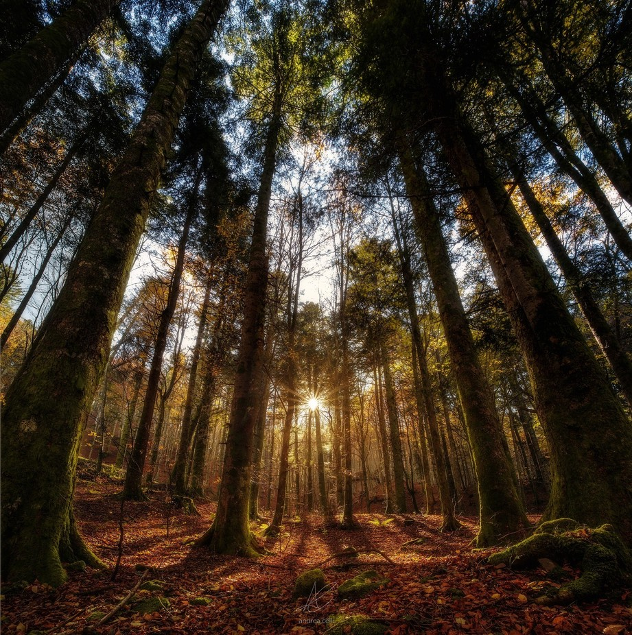 Sacred Forest by andreacelli - Large Photo Contest