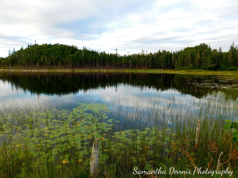 This photo was taken at Ned's Pond in Stephenville, Newfoundland. August 2016.