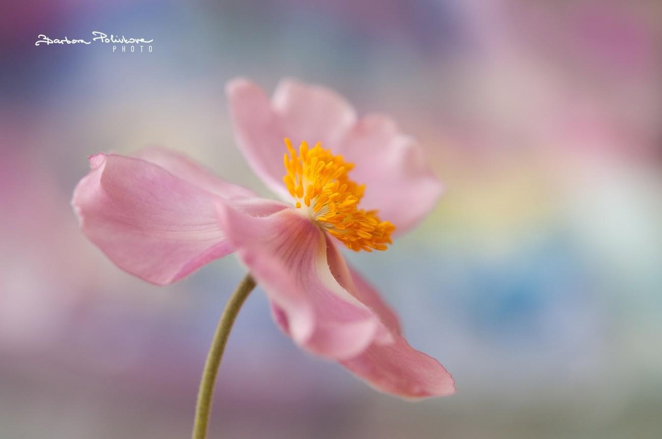 Dancing Flowers Photo Contest Winners Blog Viewbug