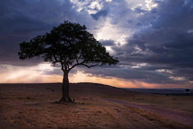 Evening Blues by heathermcfw - A Lonely Tree Photo Contest