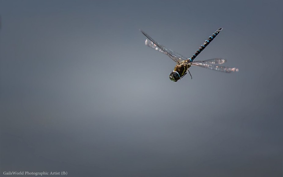 So, after four years of trying every summer to get a dragonfly in flight and sharp with some moti...