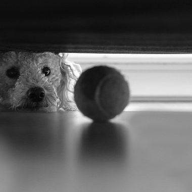 What is a doggie to do when his favourite tennis ball gets stuck under a chair?