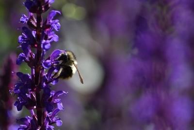 Hooked on Pollen!
