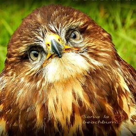 There's something about birds I can't explain, but I'm fascinated !  Here's a beautiful bird of prey...