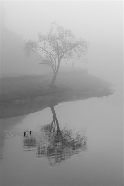 Lonely Stroll in Fog