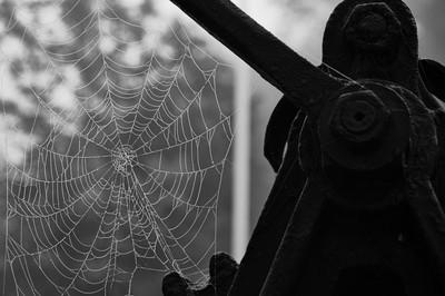 Burritt's Rapids Locks (Lock 17) Spider Web
