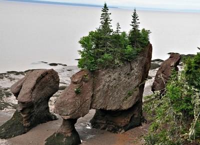 Hopewell Rocks Low Tide
