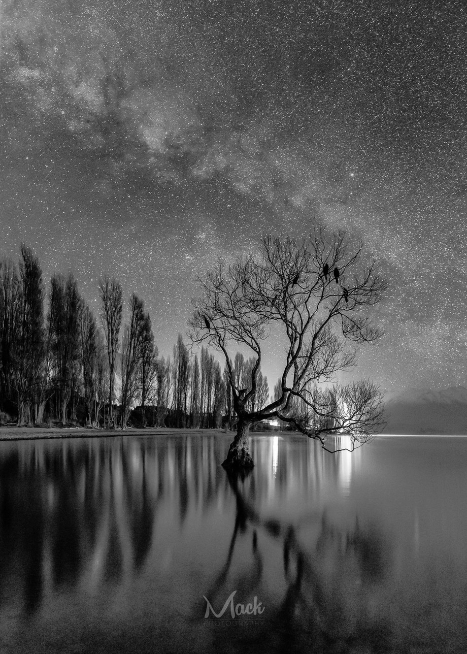 That Wanaka Tree – Night by Mike_MacKinven - Landscapes In Black And White Photo Contest