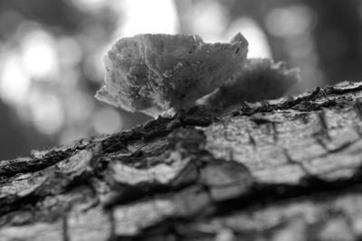Log Fungi