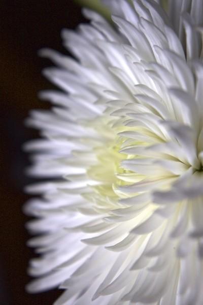Peaceful White Flower
