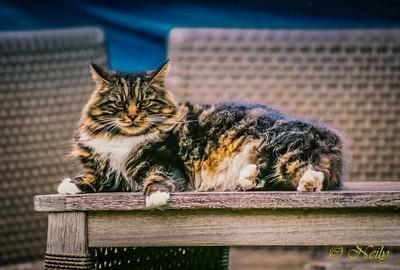 Antique film cat in garden
