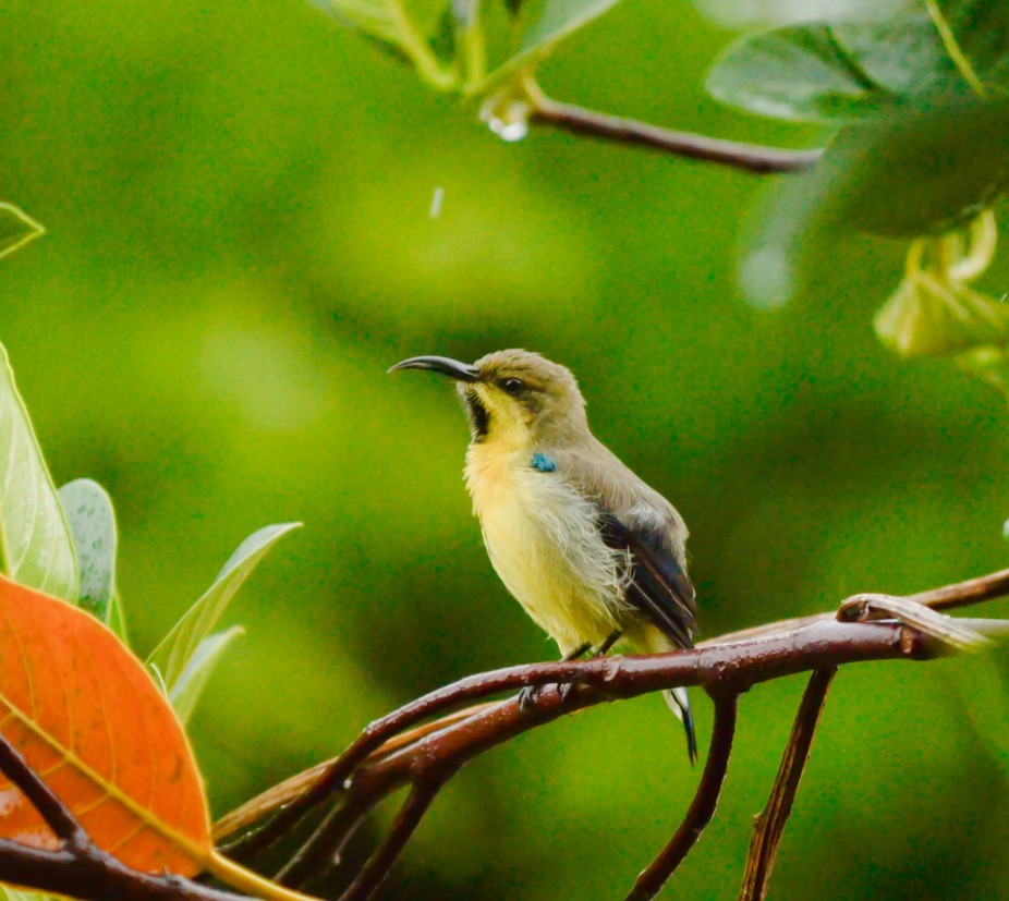 i was very much keen to have a pic of this bird but since they are very much active and don&#...