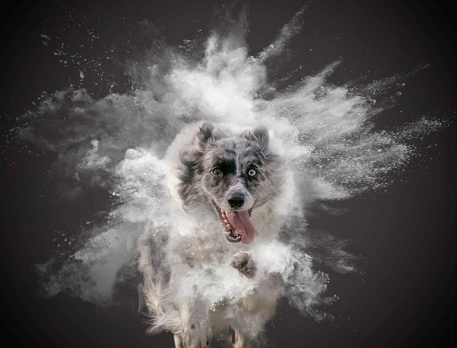 Border Collie Gypsy is a flyball dog.  And a very beautiful one I may say.   The original picture...