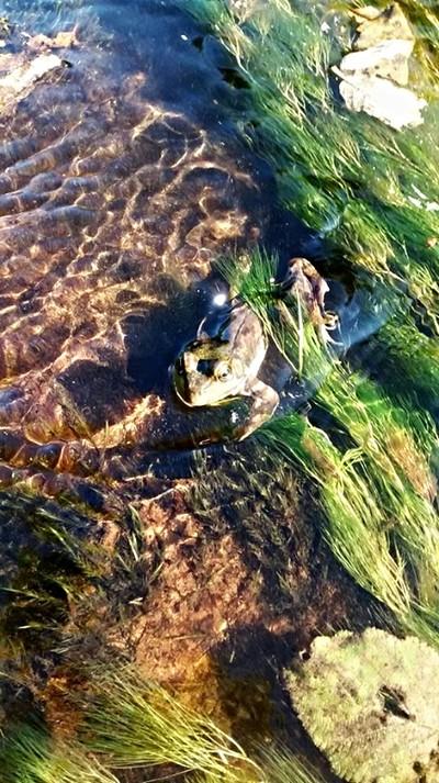Eel Grass Swim