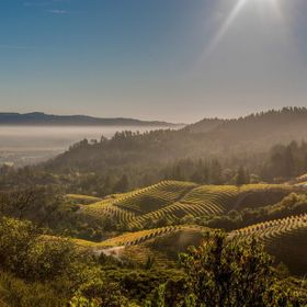 Rows of vines define Napa Valley, California.