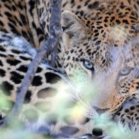 Leopard - best ever pic
