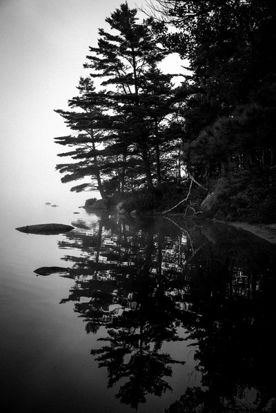 Reflections in a Morning Fog