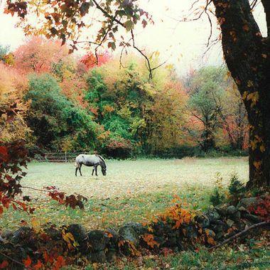 Horse in field near Toledo, OH